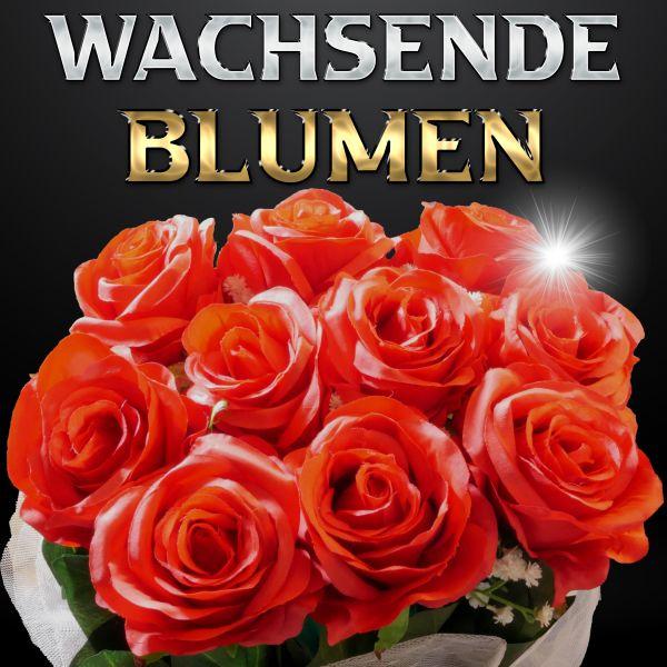 Wachsende Blumen by Bond Lee Zaubertrick